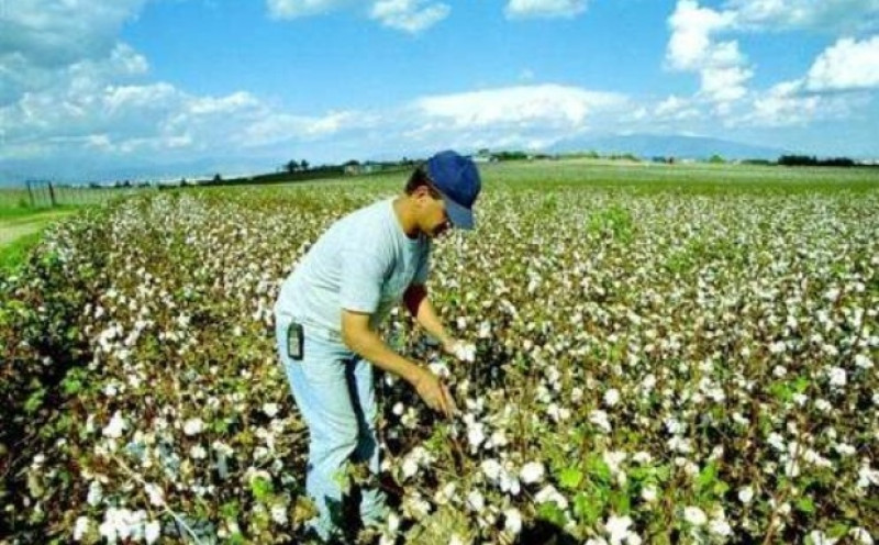 Αποτέλεσμα εικόνας για βαμβακοπαραγωγούς της Πιερίας